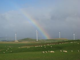 rainbow arching over turbines and sheep at Mahinerangi wind farm